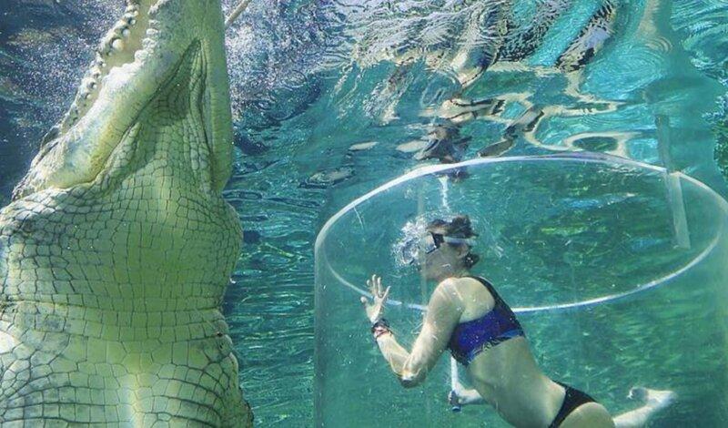 Australia: 200 mila coccodrilli e almeno un attacco mortale l'anno Image